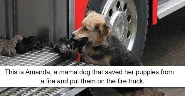 heroes dogs good boy girl