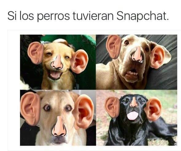 perros snapshot