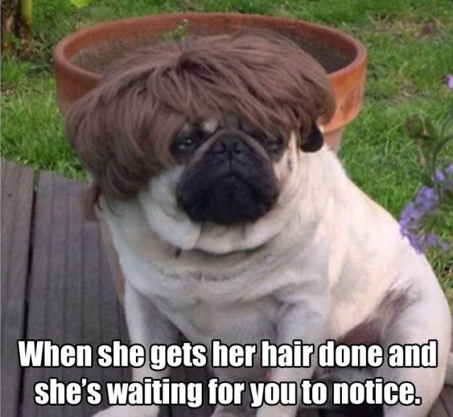 hair haircut pugs Memes girlfriend dating - 8805458432