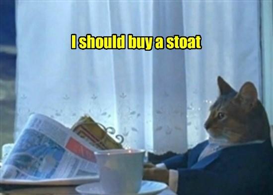 Cats caption buy Memes - 8805480704