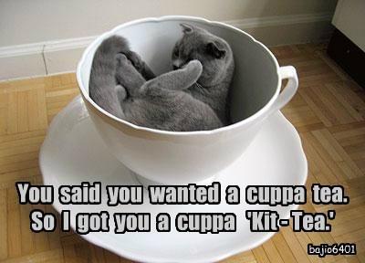 Cats cute caption cup tea - 8805545728