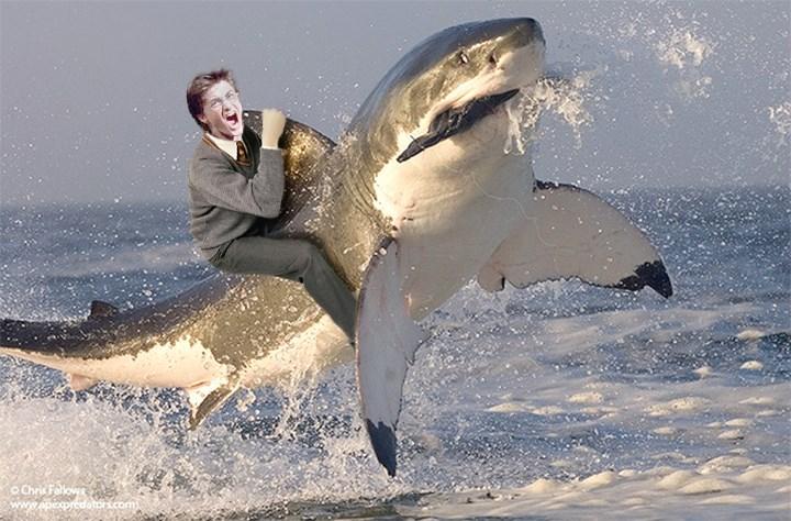 Shark - OChris Fallows predator.com