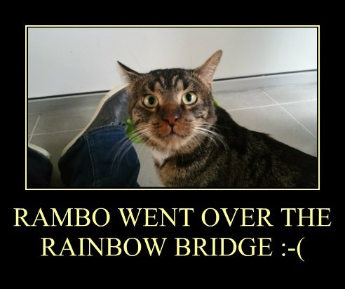 RAMBO WENT OVER THE RAINBOW BRIDGE :-(