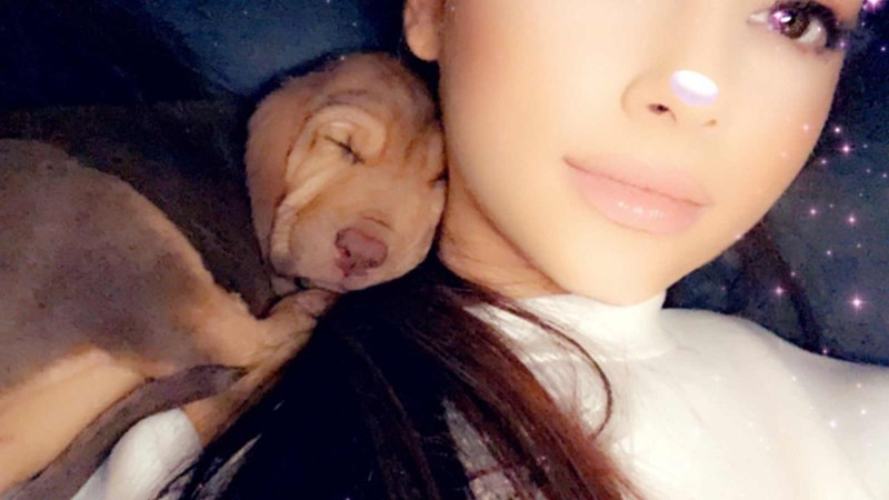 ariana grande dogs that are cute