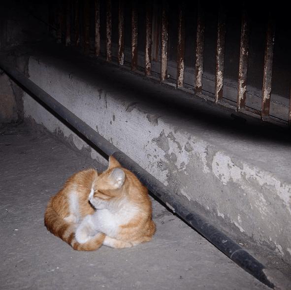 stray cat - Cat