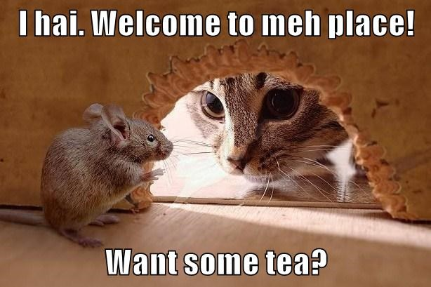 I hai. Welcome to meh place!  Want some tea?