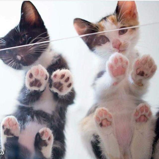cats glass cute aww