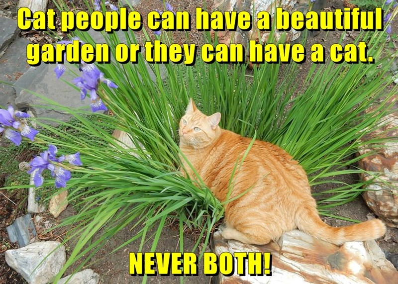 Cat people can have a beautiful garden or they can have a cat.  NEVER BOTH!