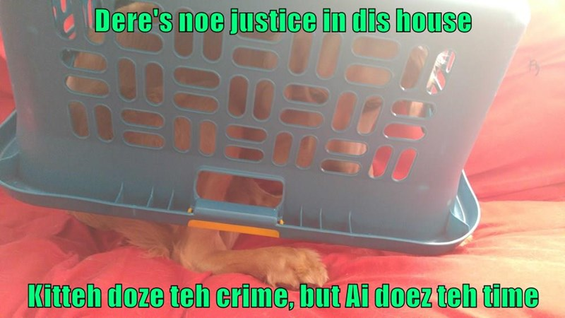 kitteh,dogs,time,justice,crime,caption,no