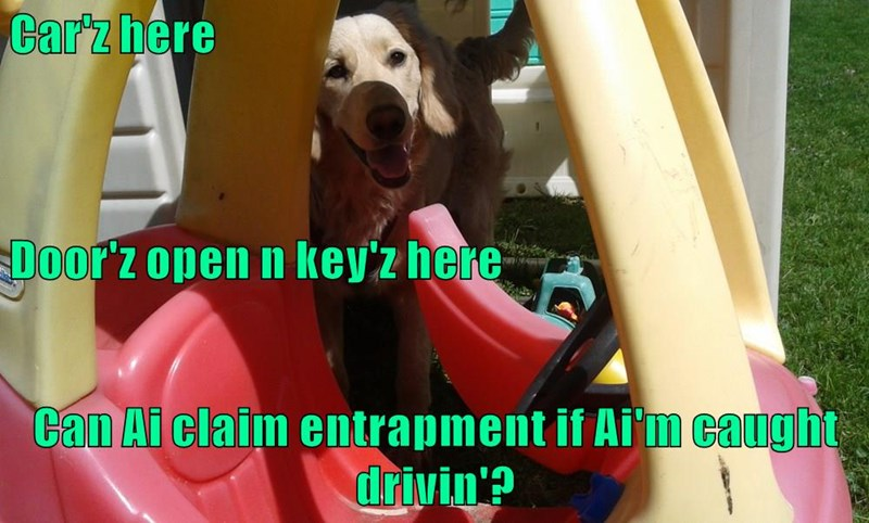 animals keys door dogs car open entrapment driving caption - 8805990656