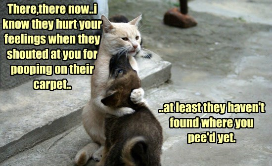 There,there now..i know they hurt your feelings when they shouted at you for pooping on their carpet..