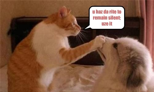 cat right puppy caption silent - 8806154752