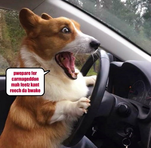 dogs,car,corgi,caption,brake