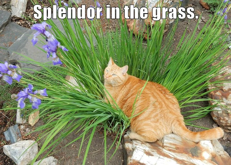 animals cat grass splendor caption - 8806171904