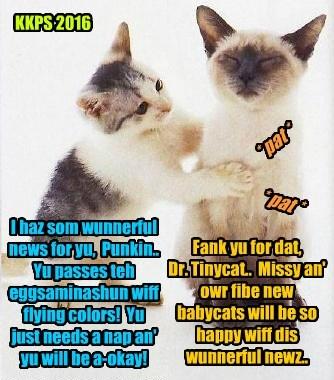 Punkin's eggsaminashuns by Dr. Tinycat also brings mor good news.. Punkin is okay just like Nemo!