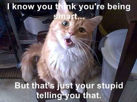 animals cat being smart think caption telling stupid - 8806194432