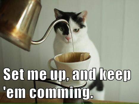 keep,cat,up,em,set,caption,coming
