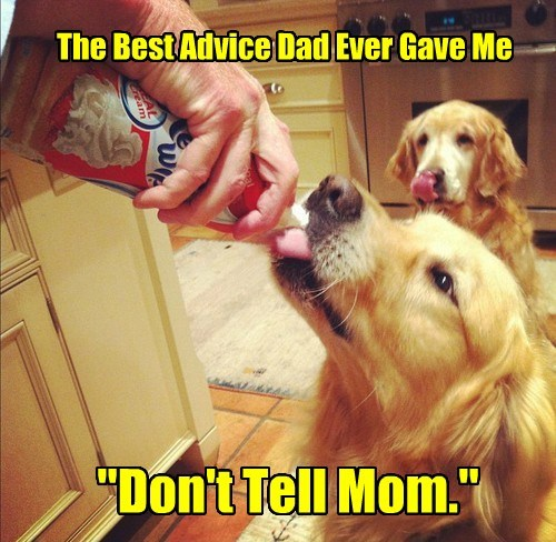 advice best caption dogs dont dad mom tell