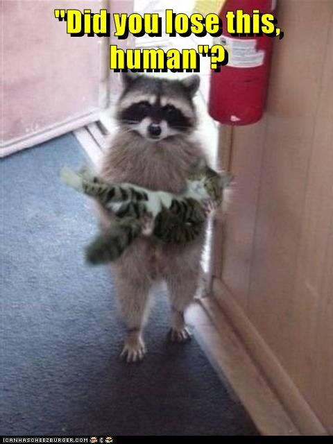 animals - 8806307584
