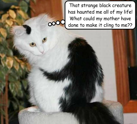 Cheezburger Image 8806313728