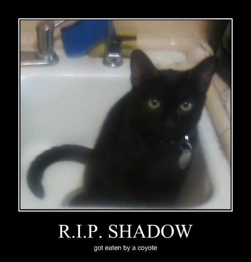 R.I.P. SHADOW