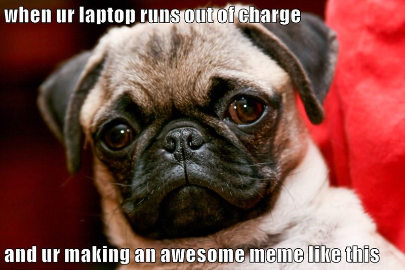 animals dogs pug meme caption laptop - 8806534144