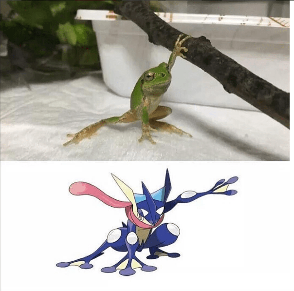 pokemon-greninja-in-real-life-frog-evolution-awesome-comparison