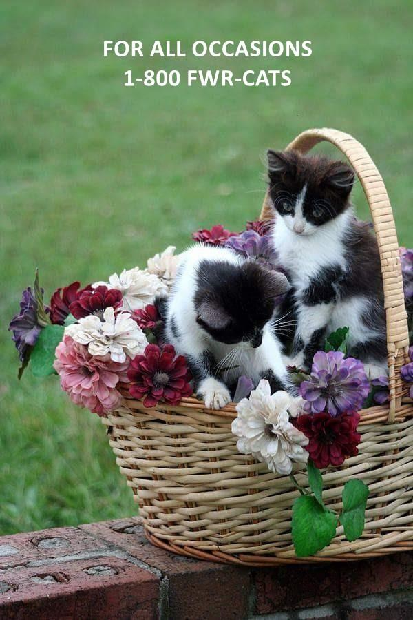 FOR ALL OCCASIONS                                                                          1-800 FWR-CATS
