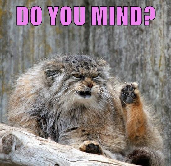 animals you cat mind do caption - 8806846464