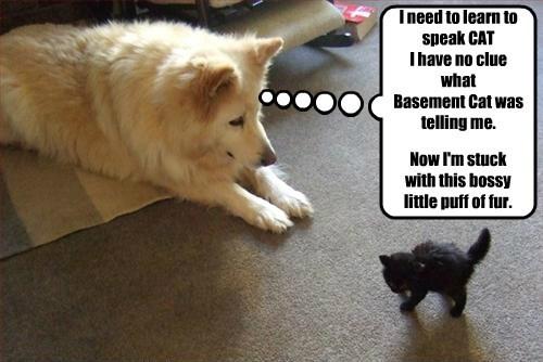 basement cat fur dogs bossy kitten puff speak caption - 8806885888