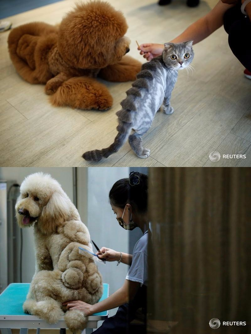 pet grooming salon in taiwan does hair raising designs