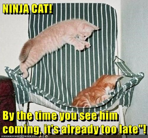 animals cat ninja time see too late caption by coming - 8806917632