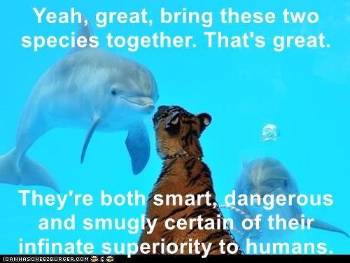 animals - 8806924800