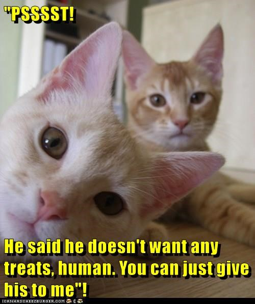 animals treats want said me doesnt kitten give - 8806972416