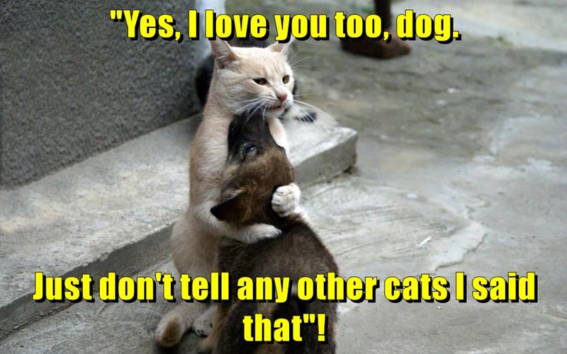 """Yes, I love you too, dog. Just don't tell any other cats I said that""!"