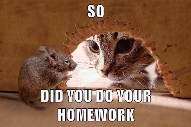 did you do your homework