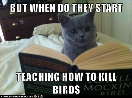animals start cat birds teaching kill when - 8807174144