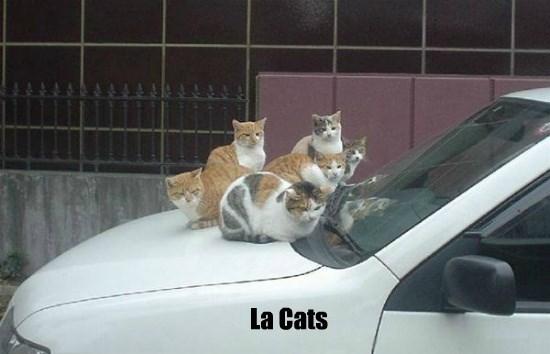 La Cats