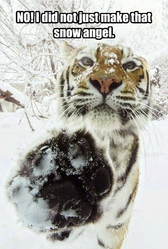 snow tiger caption Cats - 8807439360