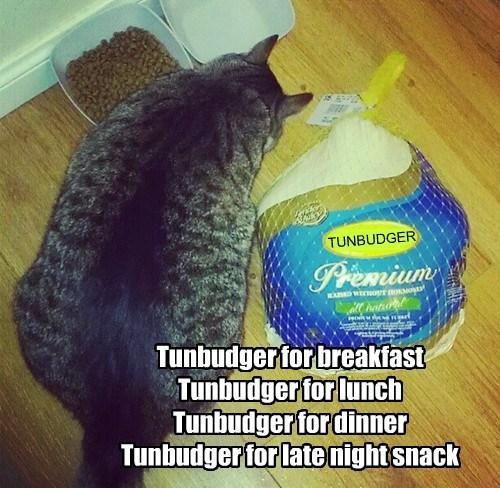 tunbudger cat breakfast snack lunch dinner caption - 8807445248