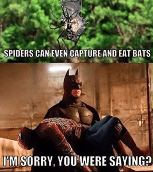 funny-batman-spider-man-superheroes-dc-marvel
