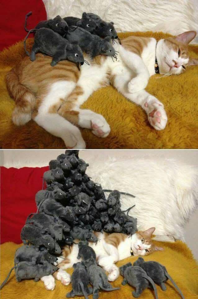 every cats worst nightmare