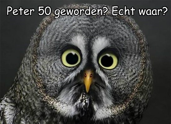 Cheezburger Image 8807545344