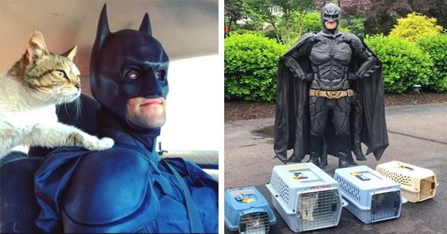 batman animals rescue hero