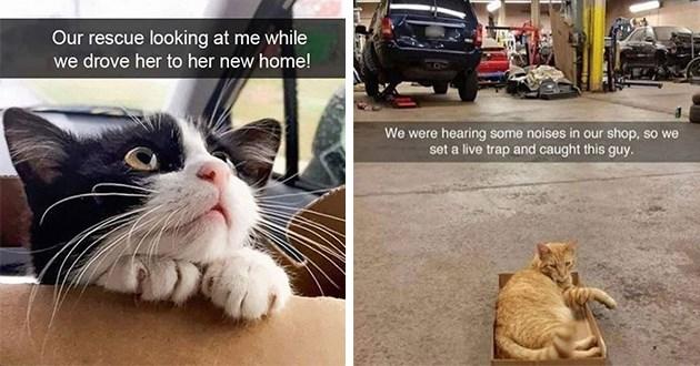 cats snapchat funny cute
