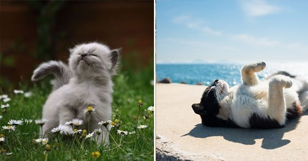 summer breeze cats cute