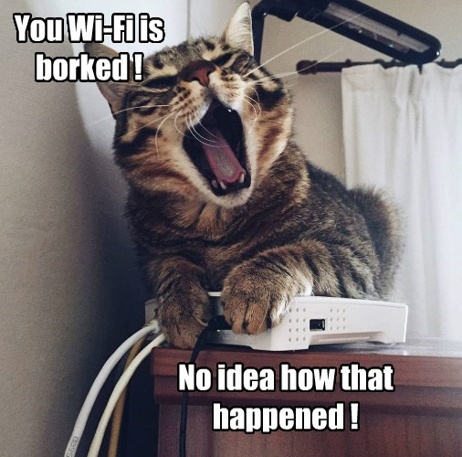 wifi caption Cats - 8810668288