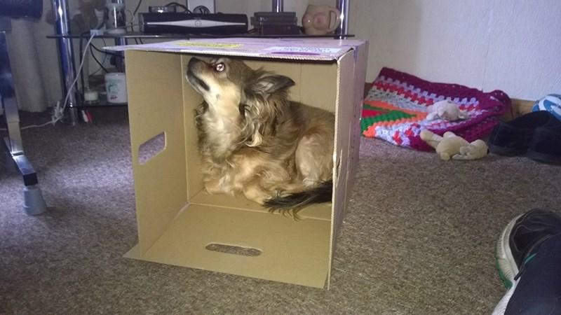 dogs box - 8810681600