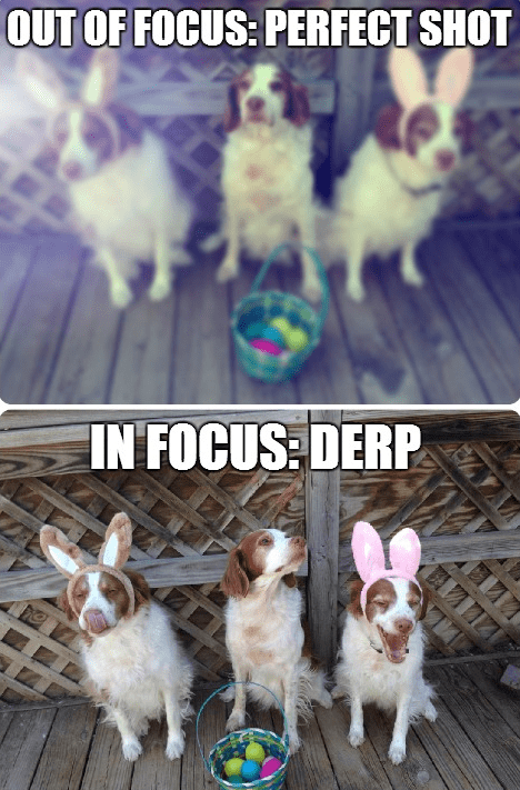 focus dogs caption derp shot - 8810682368