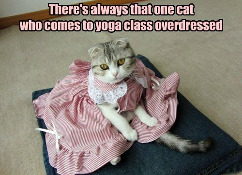 There's always that one cat who comes to yoga class overdressed